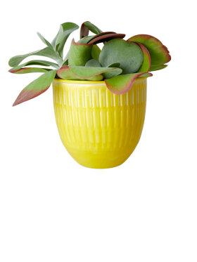 Rice - Metal Flower Pots